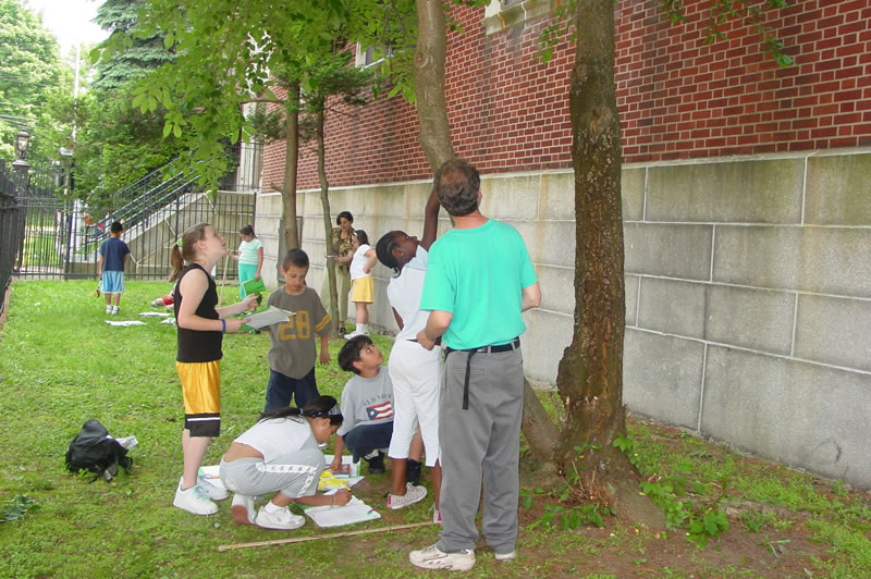 EDUCATE: GrowNYC youth urban forestry education program. Photo courtesy of NYC Urban Field Station
