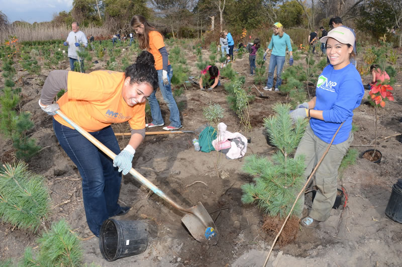 MANAGE: Volunteers at a MillionTreesNYC tree planting. Photo courtesy of NYC Parks