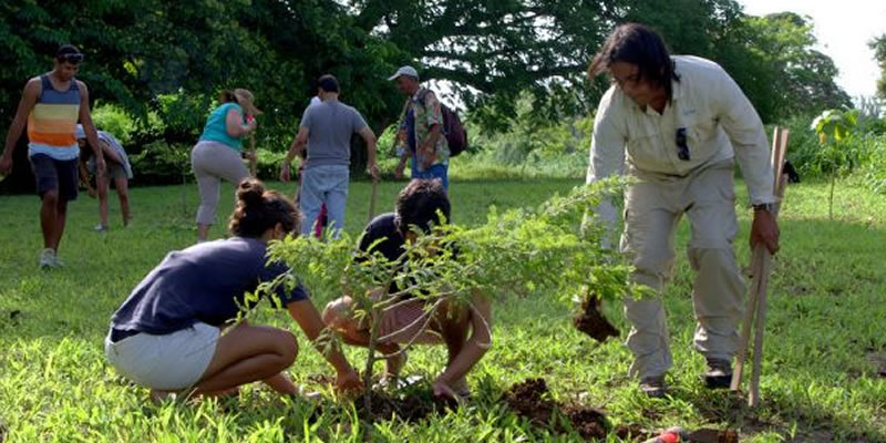 Volunteers participate in a tree planting.