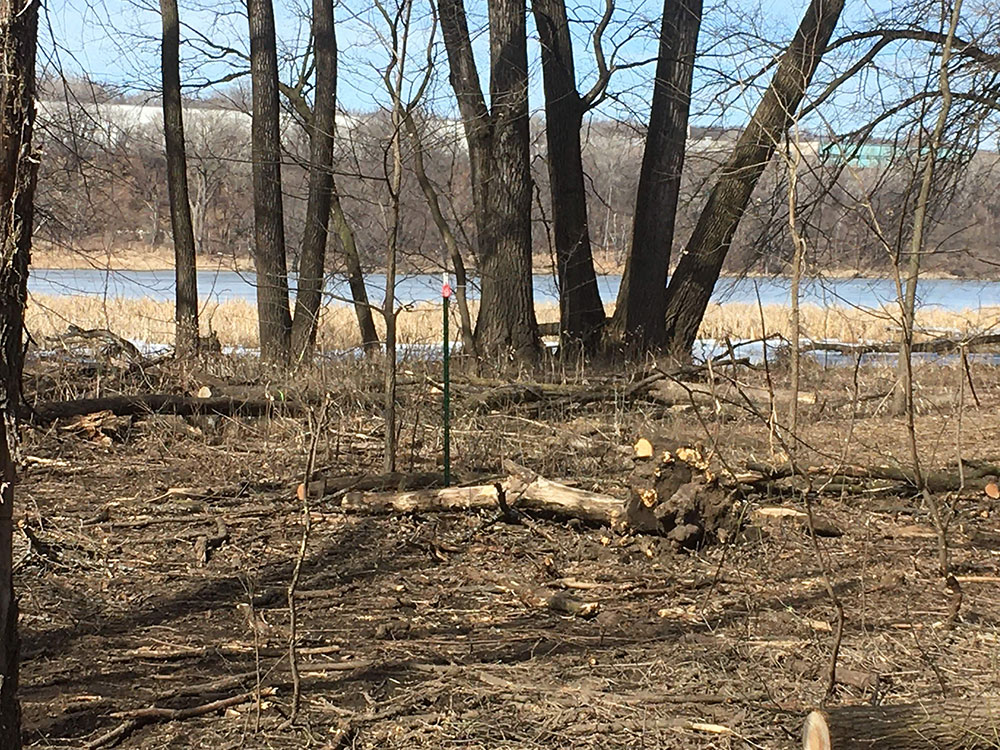 1/10 acre plot in March 2020 after removal of dead ash trees. Some downed wood can be seen in the foreground. Some living trees surround the plot with Crosby lake in the background.
