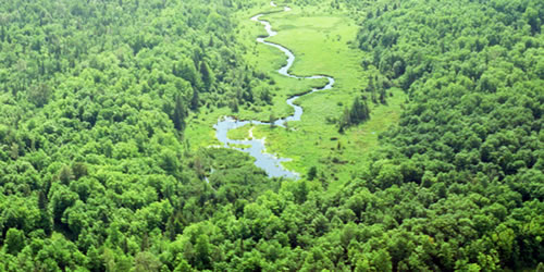 [photo:] Aerial view of green forest with winding river