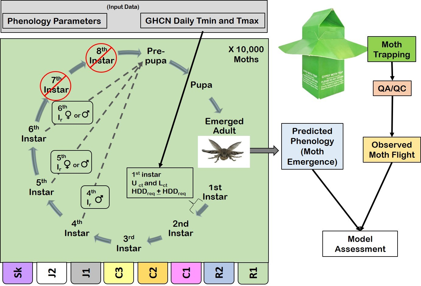 The agent-based phenology model is represented by a green box with a circular flow diagram and demonstrates the multiple paths through different numbers of instars that moths may follow on their way to pupation. Tabs below the box represent the multiple populations, each of which has population-specific parameters and numbers of instars. Boxes along the right describe the process flow for the assessment of the model. Note that the model produces the parameter 'moth emergence', while the trap data documents moth flight, the timing of which may differ from moth emergence.