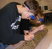 [photo:] Students examining external symptoms on an ash log