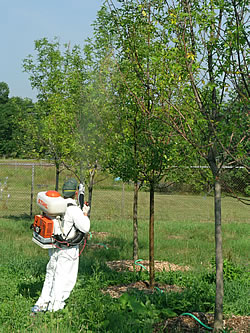 Photo applying chemical pesticide using a backpack sprayer