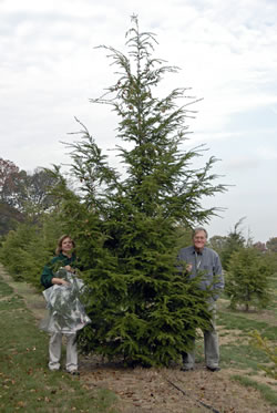 [photo:] Susan Bentz and Mike Montgomery standing next to a hybrid hemlock tree.
