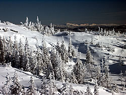[photo:] Boreal forest with snow cover.  Photo by Richard Strimbeck, Norwegian University of Science and Technology.