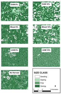[image:] Spatial arrangement of forest size classes at simulation year 200 for seven forest management scenarios on a 2835 ha subset of the 71,142 ha landscape in southern Missouri. Individual pixels are 30 m by 30 m (0.09ha).  EAM and UAM indicate even-aged and uneven-aged management, respectively; mixed indicates a combination of the two.  Percentages indicate the proportion of the landscape treated per decade.  Such maps and their digital counterparts can be created for each decade of a modeled scenario.