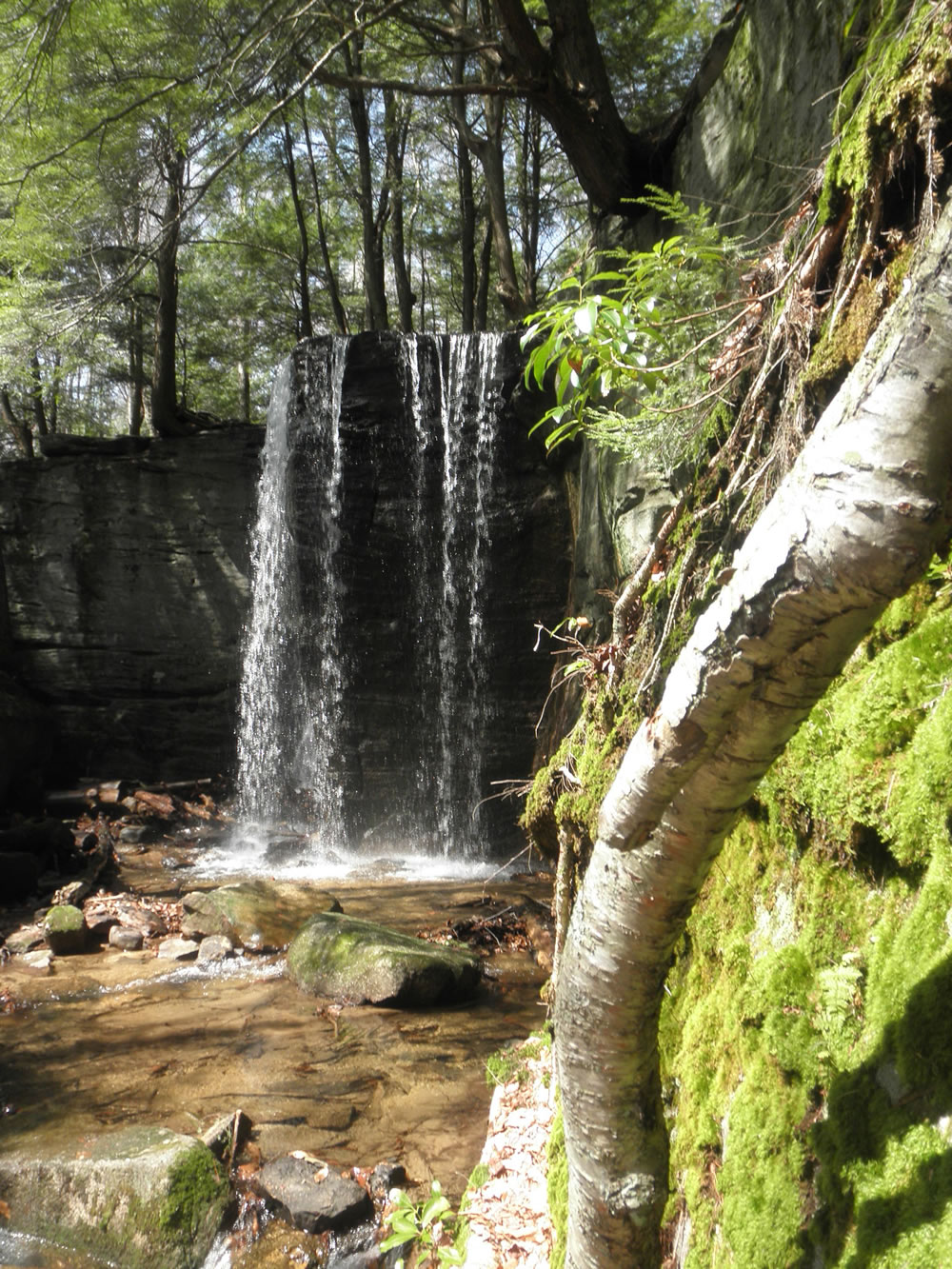 Hector Falls in Allegheny National Forest