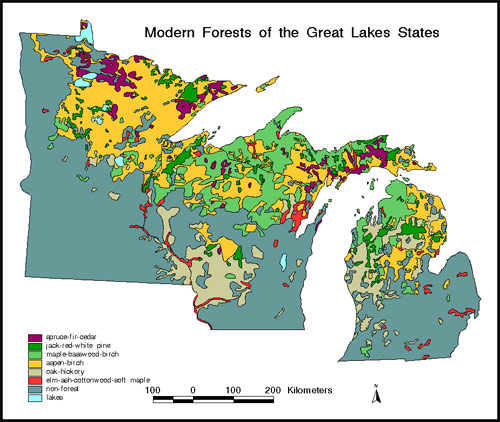 Graphic Contemporary Forest Of The Western Great Lakes Region