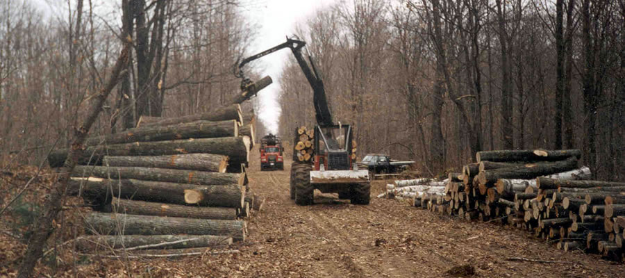 Timber harvest operation.