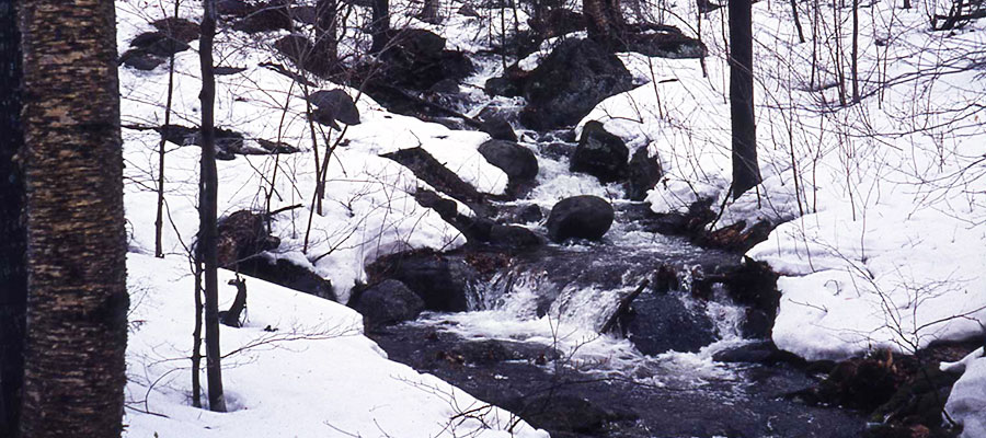 Snow melt on the Hubbard Brook Experimental Forest in New Hampshire.