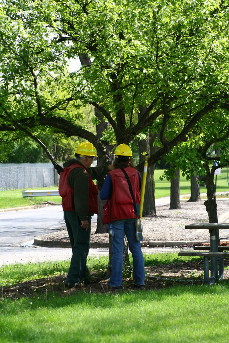 Mark Majewski & Dana Carothers- NRS-FIA employees measure an urban tree in DuPage County, IL.