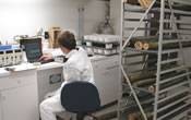 Technician studying Asian Longhorned Beetle works in Ansonia Quarantine Laboratory