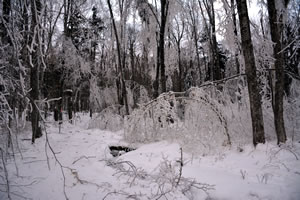Photograph of simulated ice storm at Hubbard Brook Experimental Forest.  Photo by Joe Klementovich, courtesy of Hubbard Brook Research Foundation.