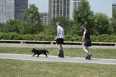 [photo:] Rollerskaters with their dog on a park trail in Chicago.  Photo by Keith Weller