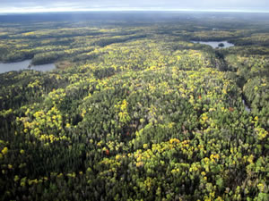 Scenic view of waterways and forest on Superior National Forest.