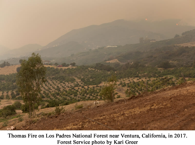 Thomas Fire on Los Padres National Forest near Ventura, California, in  2017.  Forest Service Photo by Kari Greer