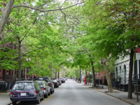Urban trees in Brooklyn Heights.