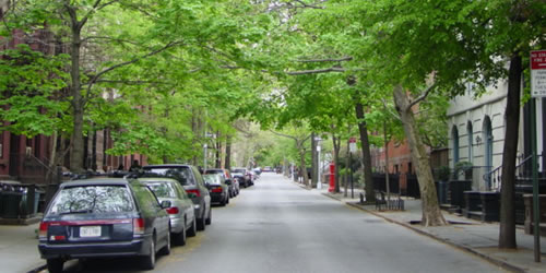 [photo:] Urban trees in Brooklyn Heights.