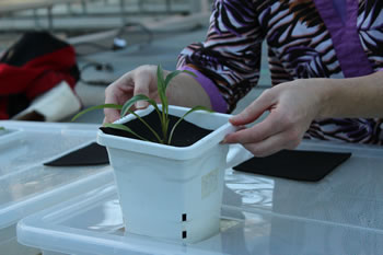 [photo:] Students learn about plant growth.