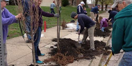 [photo:] Tree Tenders planting in the Roxborough neighborhood as part of the PHS Plant One Million Campaign