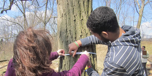 [photo:] Forest Service Scientist measures trees with Saul High School student as part of More Kids in the Woods