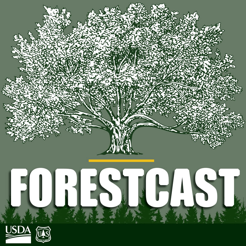Forestcast artwork.
