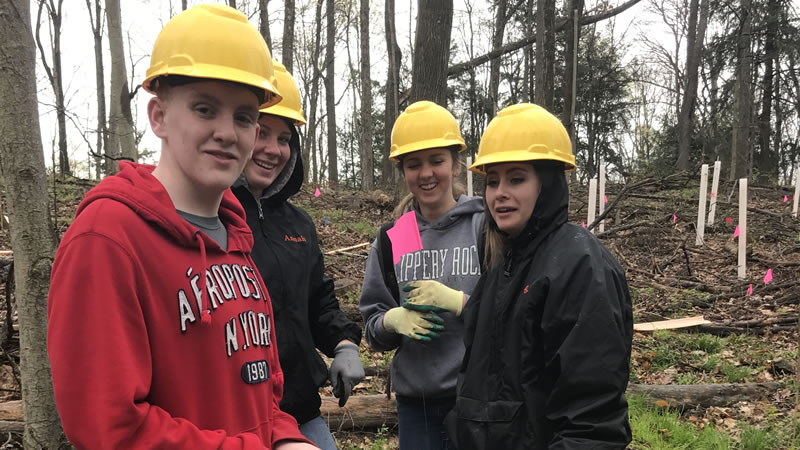 High school students help install a hybrid  American chestnut study