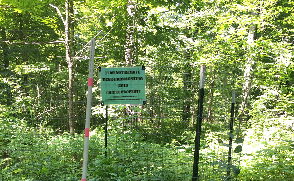 Fencing around study area to keep deer out.