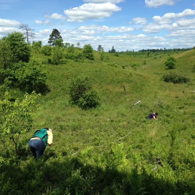 Field staff taking reference plot measurements in a State natural area.