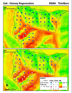 [image:] Top map shows the Racoon Ecological Management Area (Thin and Burn treatment) in 2000, before thinning and two burns, for 'competitiveness' for oaks and hickories. Bottom map shows the same (plus percent open sky as size of circles) after treatments and sampled in 2006. Blue points show non-competitive oaks, while red points show reasonably competitive oaks are present. Background colors reflect the integrated moisture index. See the featured publication for more details.