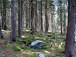 Restoration of Red Spruce Ecosystems - Sustaining Forests ...