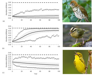[image:] Population projections based on viability models for wood thrush, worm-eating warbler, and prairie warbler under current landscape conditions in the Central Hardwoods Bird Conservation Region (Bonnot et al. 2011).