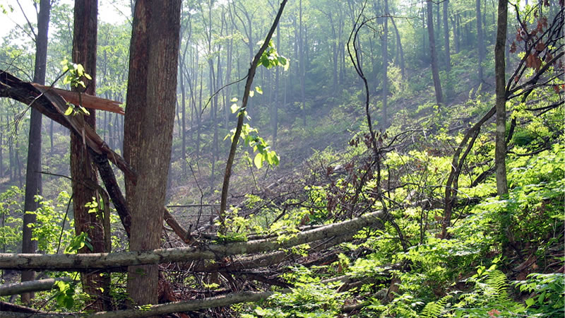 Forest disturbances can result from human actions, such as harvesting, as well as from natural disturbances, such as wind or ice damage, insect defoliation, or diseases.
