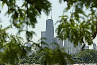 [photo:] Sears Tower, Chicago through tree branches