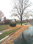 [photo:] Residential street  with fallen leaves along curb