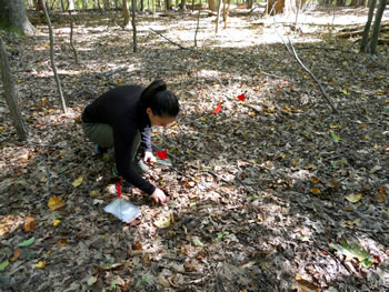 biotic and abiotic drivers of decomposition rates a comparison